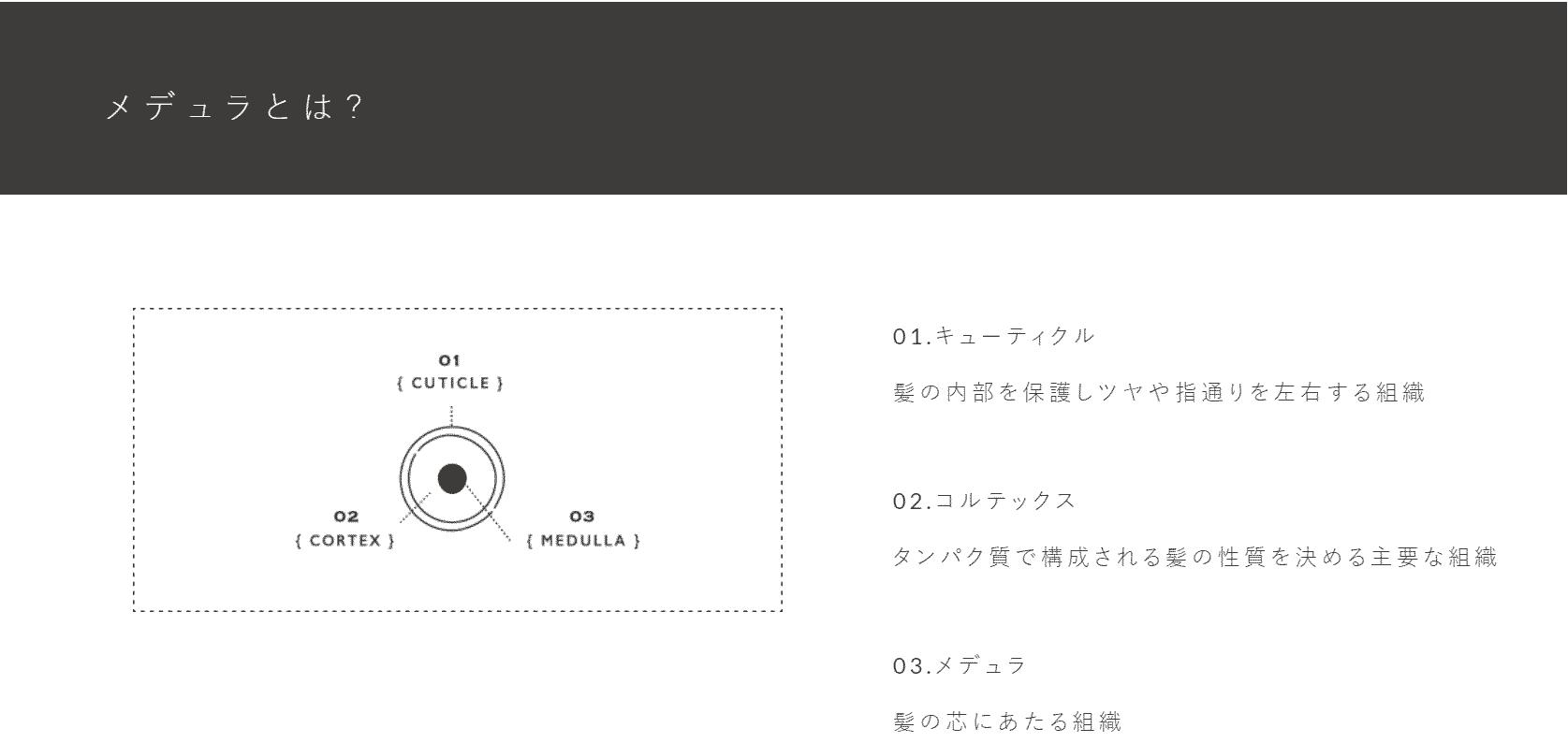 メデュラ公式サイトの画像